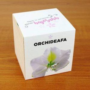 Orchideafa - Nem is lehetnél ennél bájosabb